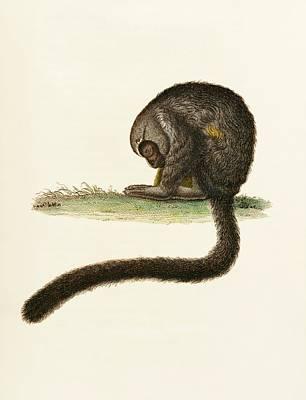 Night Monkey Poster