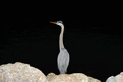 Poster featuring the photograph Night Of The Blue Heron 2 by Anthony Baatz
