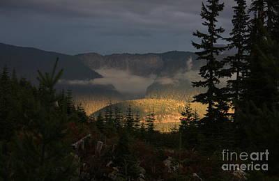 Night On Cougar Mountain Series Vi Poster by Amanda Holmes Tzafrir