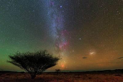 Night Sky Over A Savanna Poster