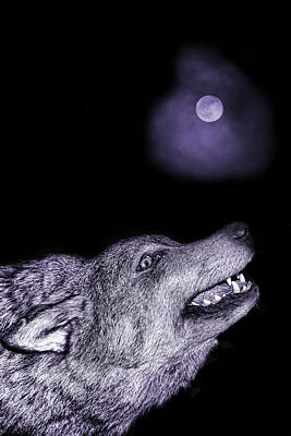 Poster featuring the photograph Night Wolf by Angel Jesus De la Fuente
