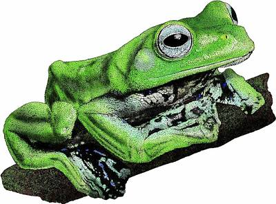 Norhayatis Flying Frog Poster by Roger Hall