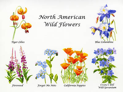 North American Wild Flowers Poster Print Poster