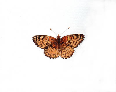 Northern Checkerspot Butterfly Poster