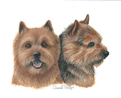 Norwich Terrier Poster by Daniele Trottier
