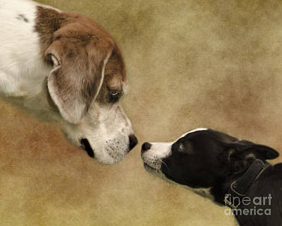 Nose To Nose Dogs Poster by Linsey Williams
