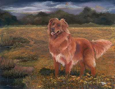 Nova Scotia Duck Tolling Retriever Poster