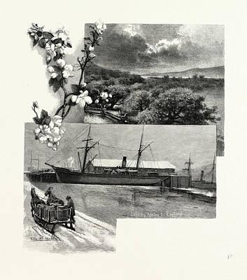 Nova Scotia, In The Annapolis Valley, Canada Poster