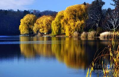 Autumn Weeping Willows Poster