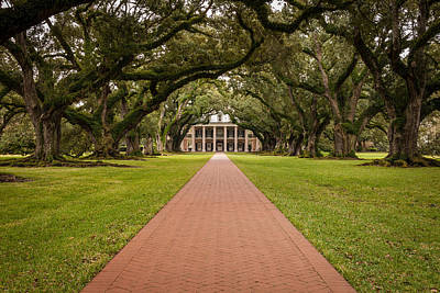 Oak Alley Plantation Poster by David Cote