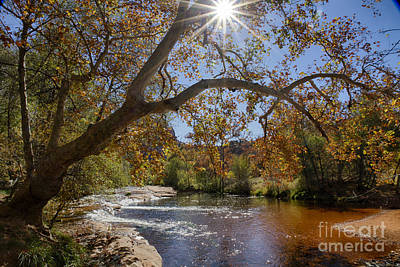 Oak Creek Poster by Idaho Scenic Images Linda Lantzy