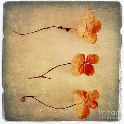 Oak Leaf Hydrangea Poster by Elena Nosyreva