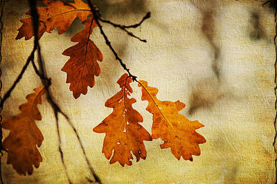 Oak Leaves At Autumn Poster by Jenny Rainbow