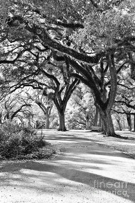 Oak Lined Path Poster