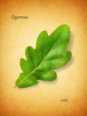 Oak Poster by Mark Rogan
