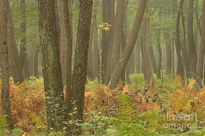Oak Openings Fog Forest Poster