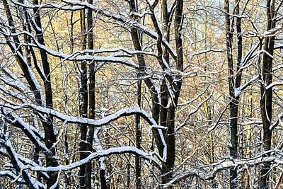 Oak Trees In Winter Poster