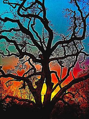 Oaks 1 Poster by Pamela Cooper