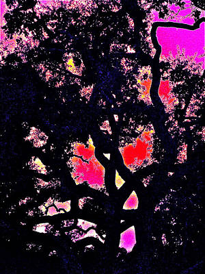 Poster featuring the photograph Oaks 10 by Pamela Cooper