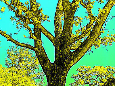 Poster featuring the photograph Oaks 3 by Pamela Cooper