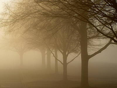 Poster featuring the photograph Oaks In The Fog by Greg Simmons