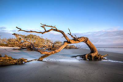Oaks On Driftwood Beach Poster by Debra and Dave Vanderlaan