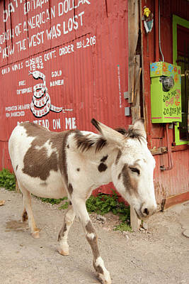 Oatman, Arizona, United States Poster