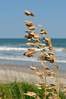 Ocean Breeze Poster by Kelly Nowak