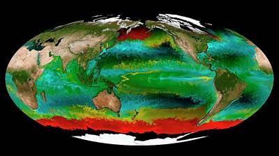 Ocean Phytoplankton Types Poster