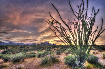 Ocotillo Sunset Poster