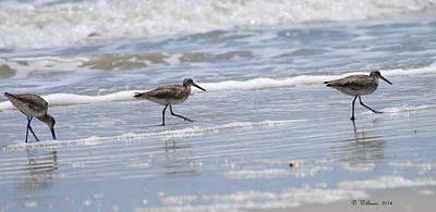 Ocracoke Shorebirds Poster
