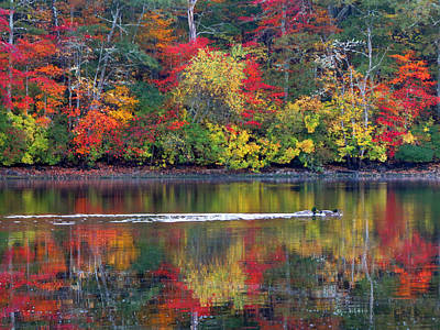 October's Colors Poster by Dianne Cowen