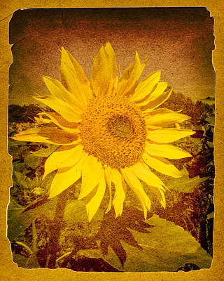 Of Sunflowers Past Poster by Bob Orsillo