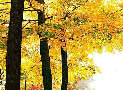 Ohio Autumn Poster