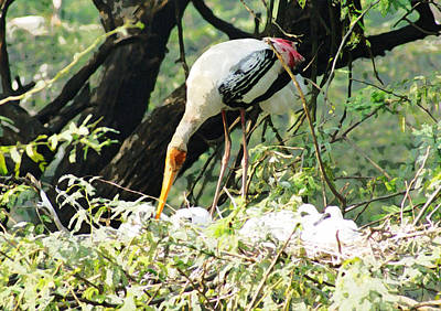 Oil Painting - Mama Stork Feeding Young Poster