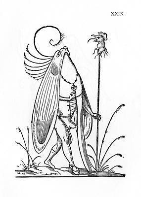 Oiseau Gourmandeur Poster by Cci Archives