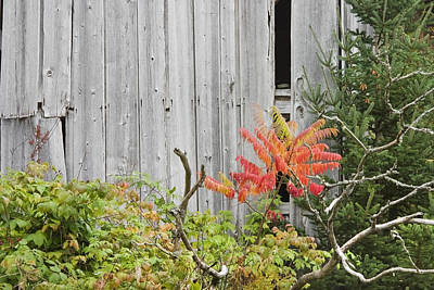 Old Barn In Fall Poster
