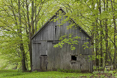 Old Barn In Spring Woods Poster