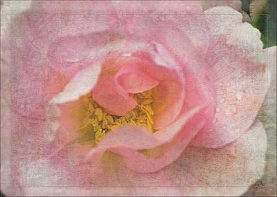 Old English Rose Poster by Liz  Alderdice