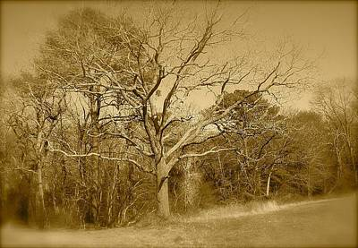 Old Haunted Tree In Sepia Poster