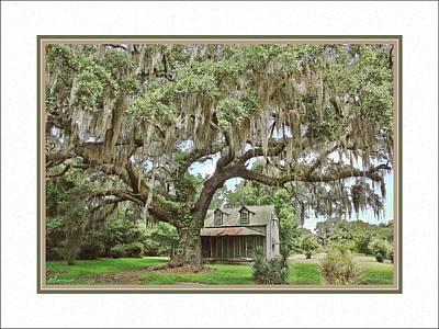 Old House And Carolina Oak Poster