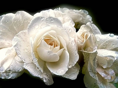 Old Lace Rose Bouquet Poster by Jennie Marie Schell
