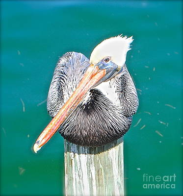 Old Man Pelican On Anna Maria Pier Poster