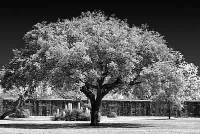 Old Oak Tree Mission San Jose Poster by Christine Till