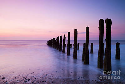 Old Sea Defence Posts At Sunrise Poster by Colin and Linda McKie