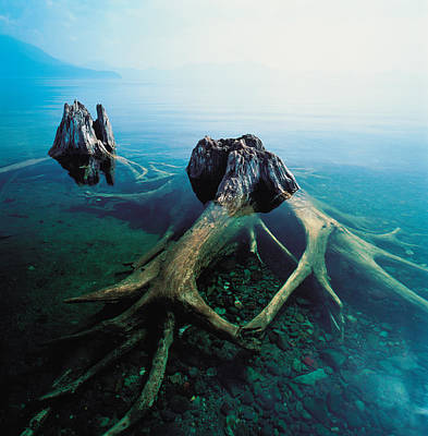 Old Tree Trunks Underwater Poster
