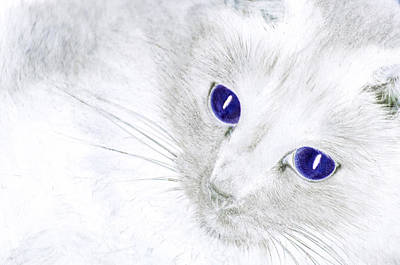 Ole Blue Eyes Poster