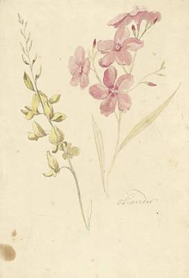 Oleander And Broom, Elias Van Nijmegen Poster by Quint Lox