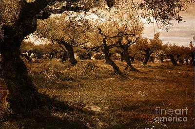 Olive Spring Poster