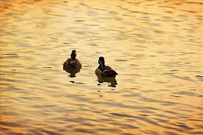 On Golden Pond Ducks Poster by Angela A Stanton